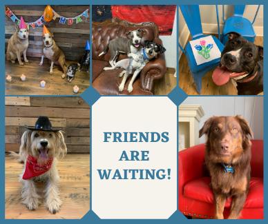 Dog Boarding - Canine Cowboy - Aubrey, TX (2)