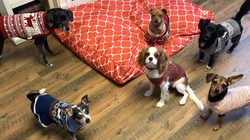 Dog Daycare Aubrey TX