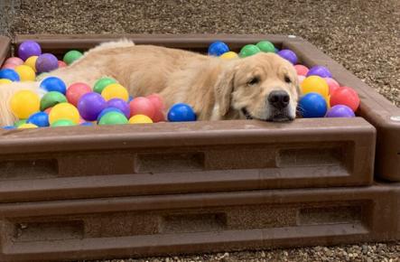Canine Cowboy Aubrey, TX Premier Dog Resort