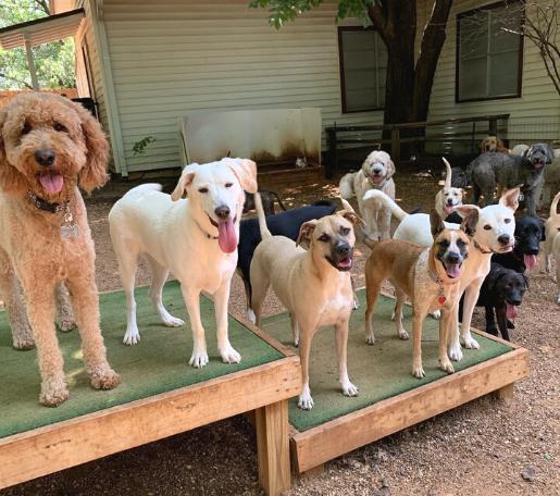 Dog Daycare Frisco TX
