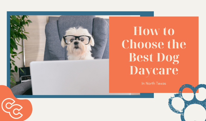 How to Choose the Best Dog Daycare - Canine Cowboy