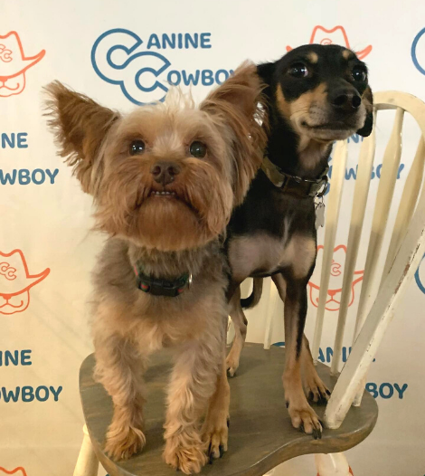 Doggie Daycare - Oak Point TX