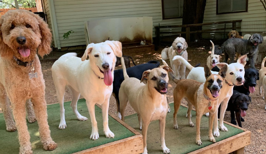Kennel Free Daycare
